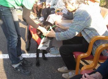 dogs121101+007_.jpg